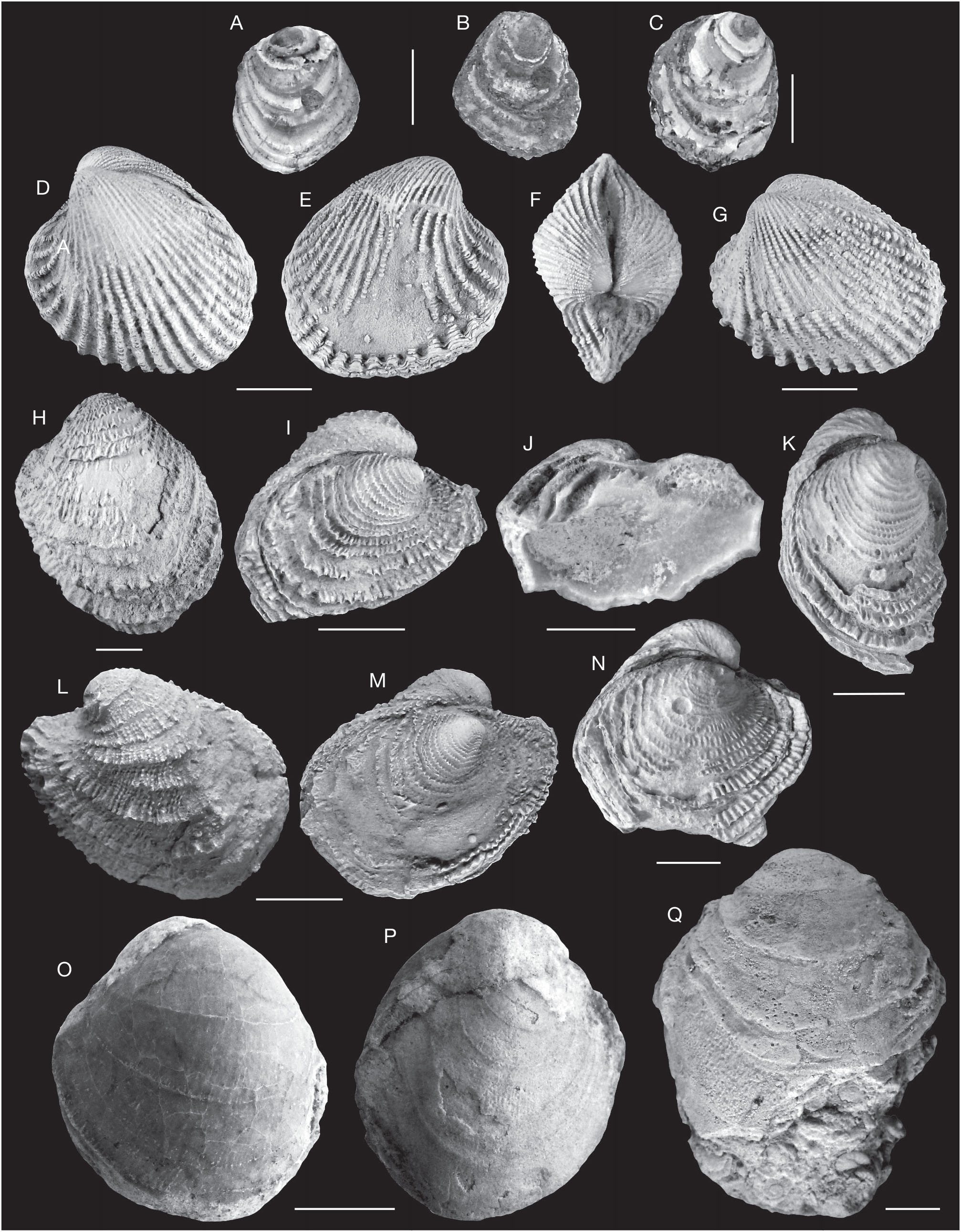 Gastropods and bivalves from the Eocene marly formations of