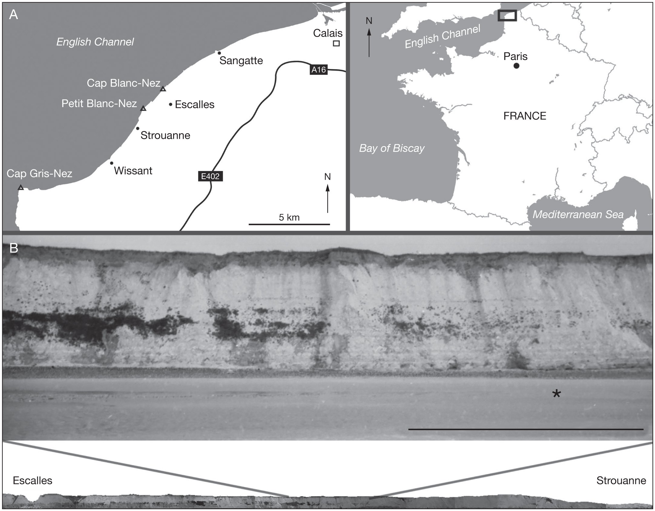 efb1da190 (IRScNB P.9895) was collected in 1996 from the clay level exposed at the  beach