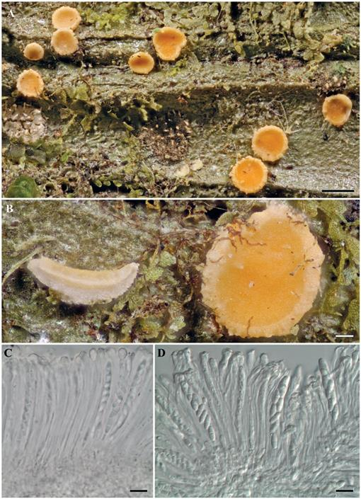 New Species and New Records of Lichens and Lichenicolous