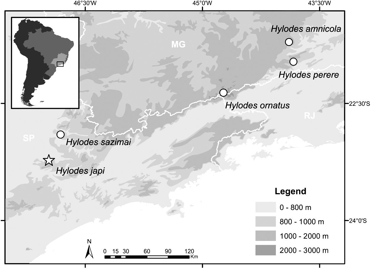 A New Species of Hylodes (Anura, Hylodidae) and its Secretive