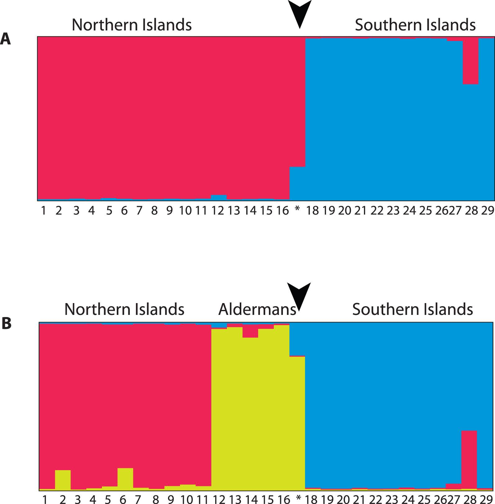 Identification of a Rare Gecko from North Island New Zealand, and