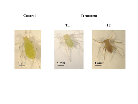 Evaluation of the Susceptibility of the Pea Aphid, Acyrthosiphon