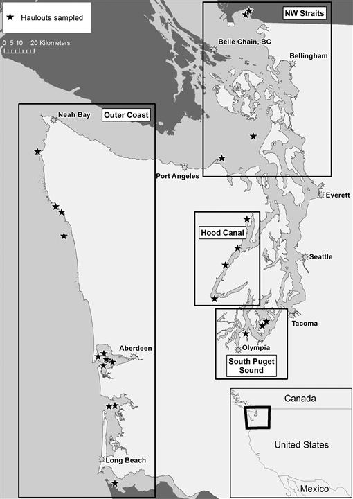 BRUCELLA PINNIPEDIALIS INFECTIONS IN PACIFIC HARBOR SEALS