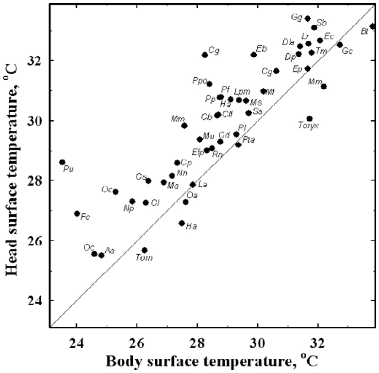 Thermographic Analysis of Body Surface Temperature of Mammals