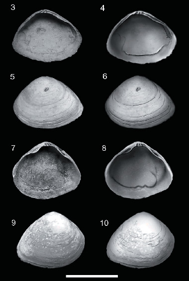 Paleoecological and Paleobiogeographic Significance of Two New