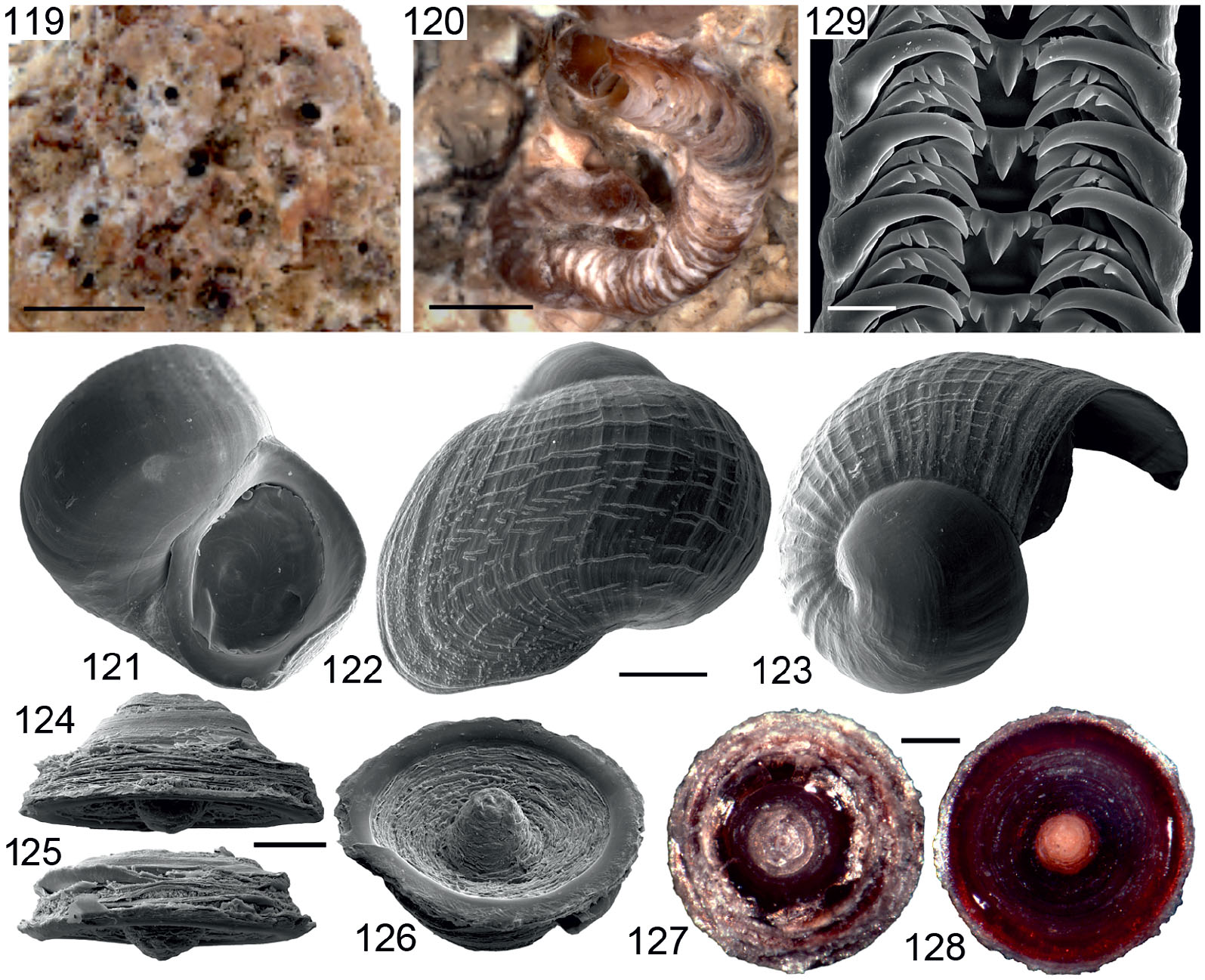 094c7231aba47 Deconstructing Dendropoma: A Systematic Revision of a World-Wide ...