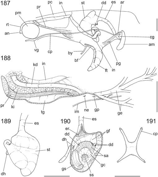 Comparative Anatomy of Selected Marine Bivalves from the