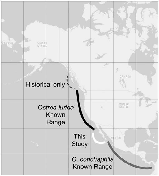Phylogeny and Species Diversity of Gulf of California ... on