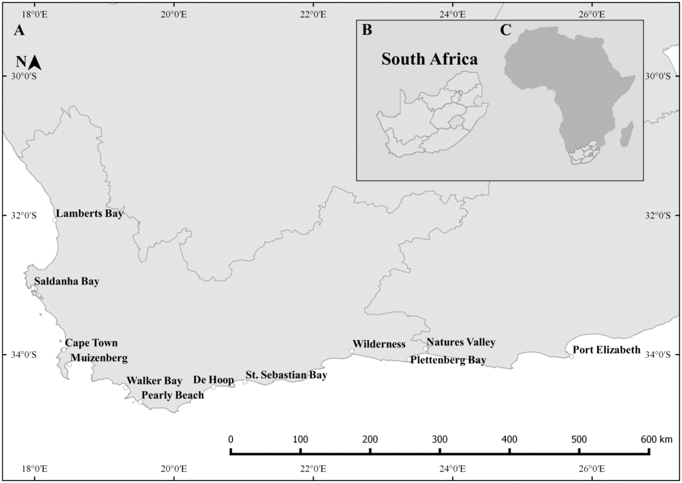 Possible non-offspring nursing in the southern right whale