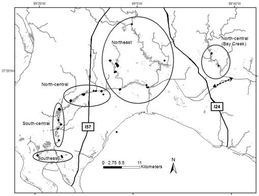Comparative Genetic Structure Of Sympatric Leporids In Southern Illinois