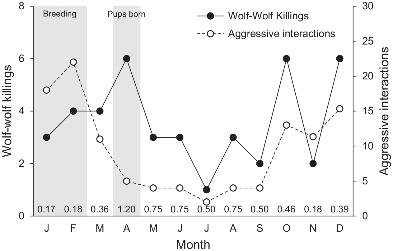 Infanticide in Wolves: Seasonality of Mortalities and