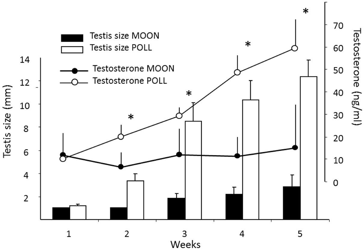 Melatonin concentrations and timing of seasonal reproduction in male