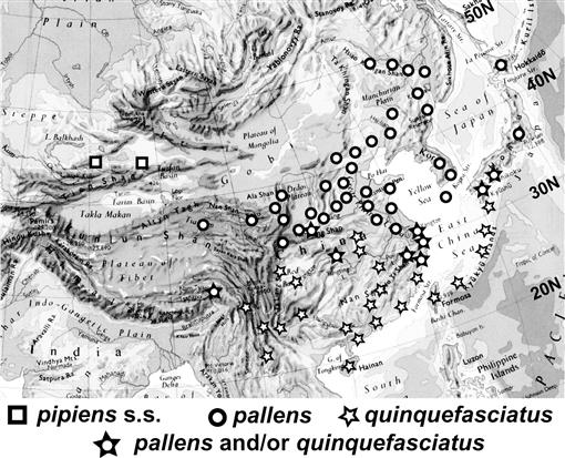 The Forms of the Culex pipiens Complex in East Asia, with