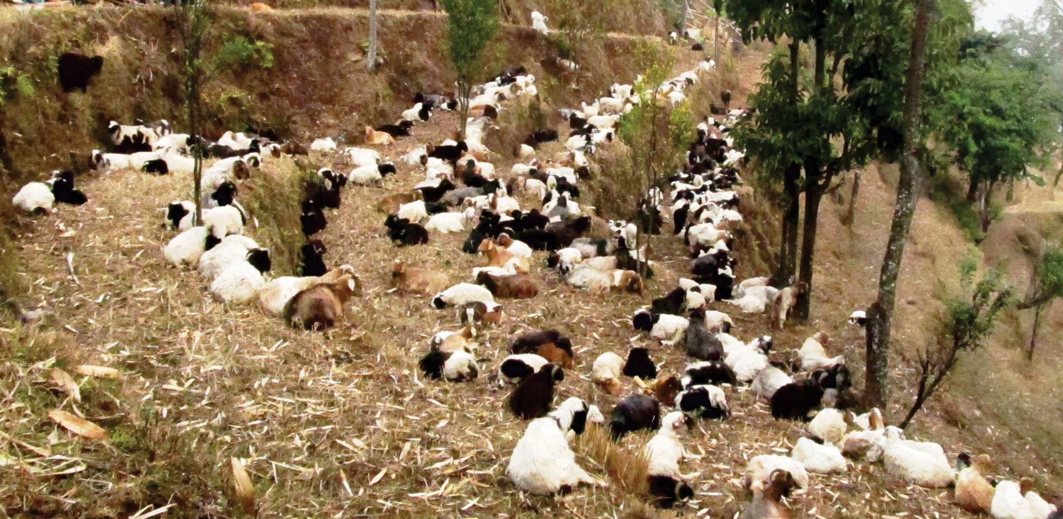 Transhumant Pastoralism in the Context of Socioeconomic and Climate Change  in the Mountains of Nepal