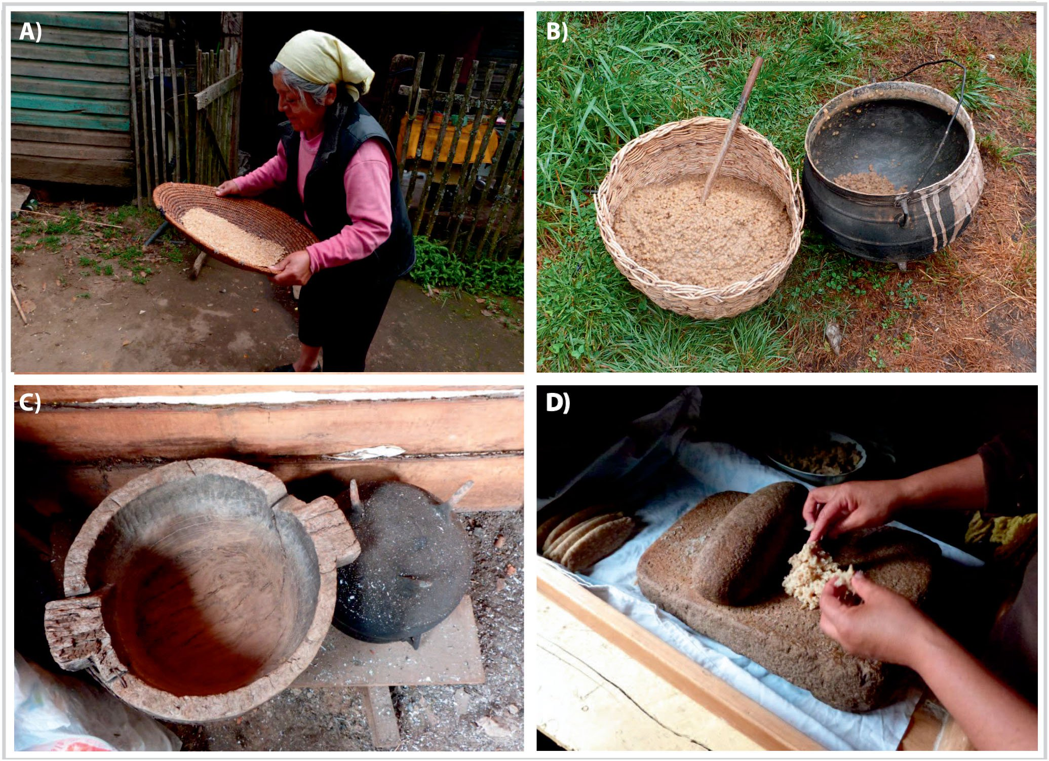 Shifts In Mapuche Food Systems In Southern Andean Forest