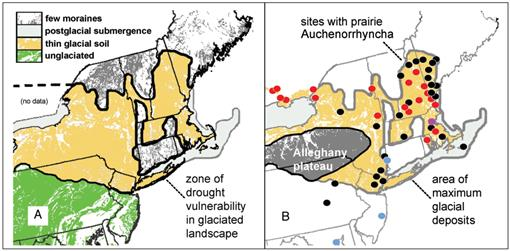 Unraveling the Enigma of an Atlantic Prairie