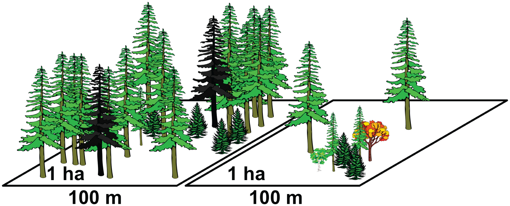 the evolution of long term data for forestry large temperate