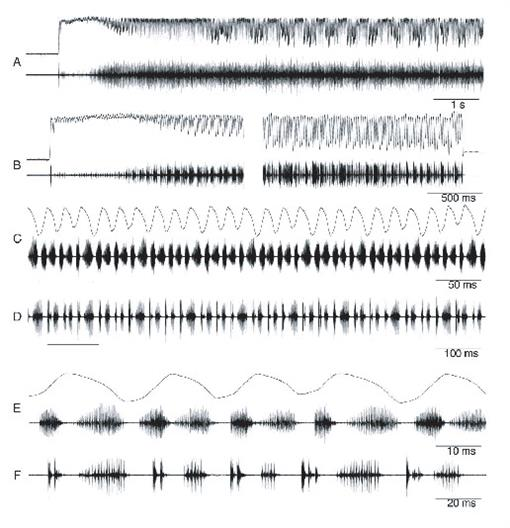 Systematics and Bioacoustics of the Genus Lithodusa
