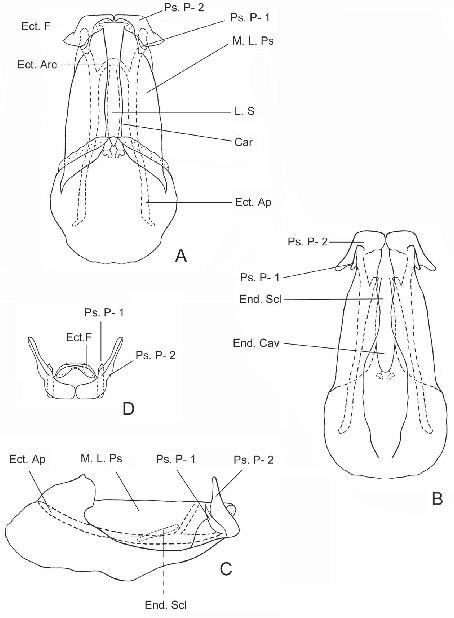 Anomaloterga Mantiqueirae A New Genus And Species Of