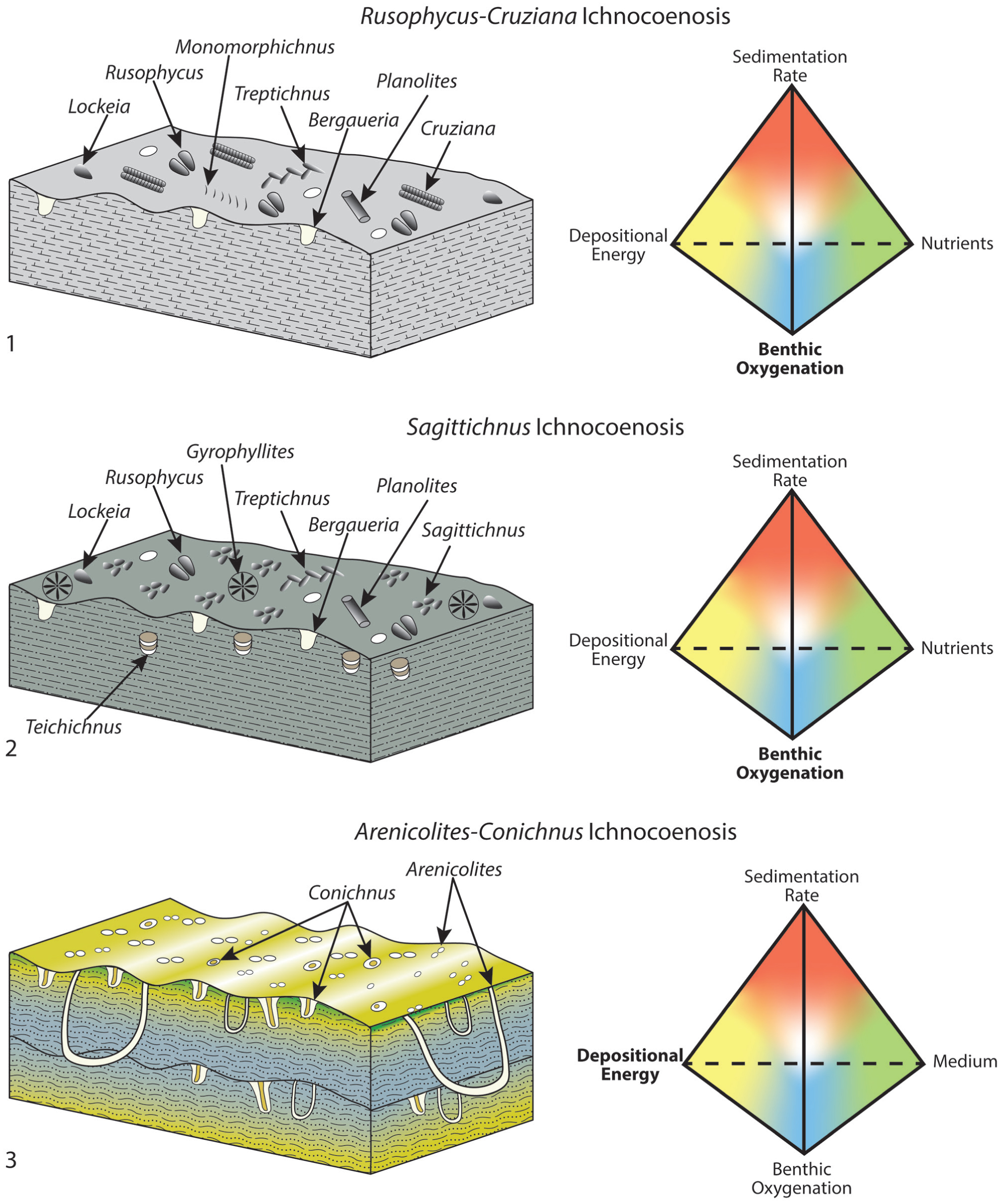 Ichnotaxonomy of the Cambrian Spence Shale Member of the