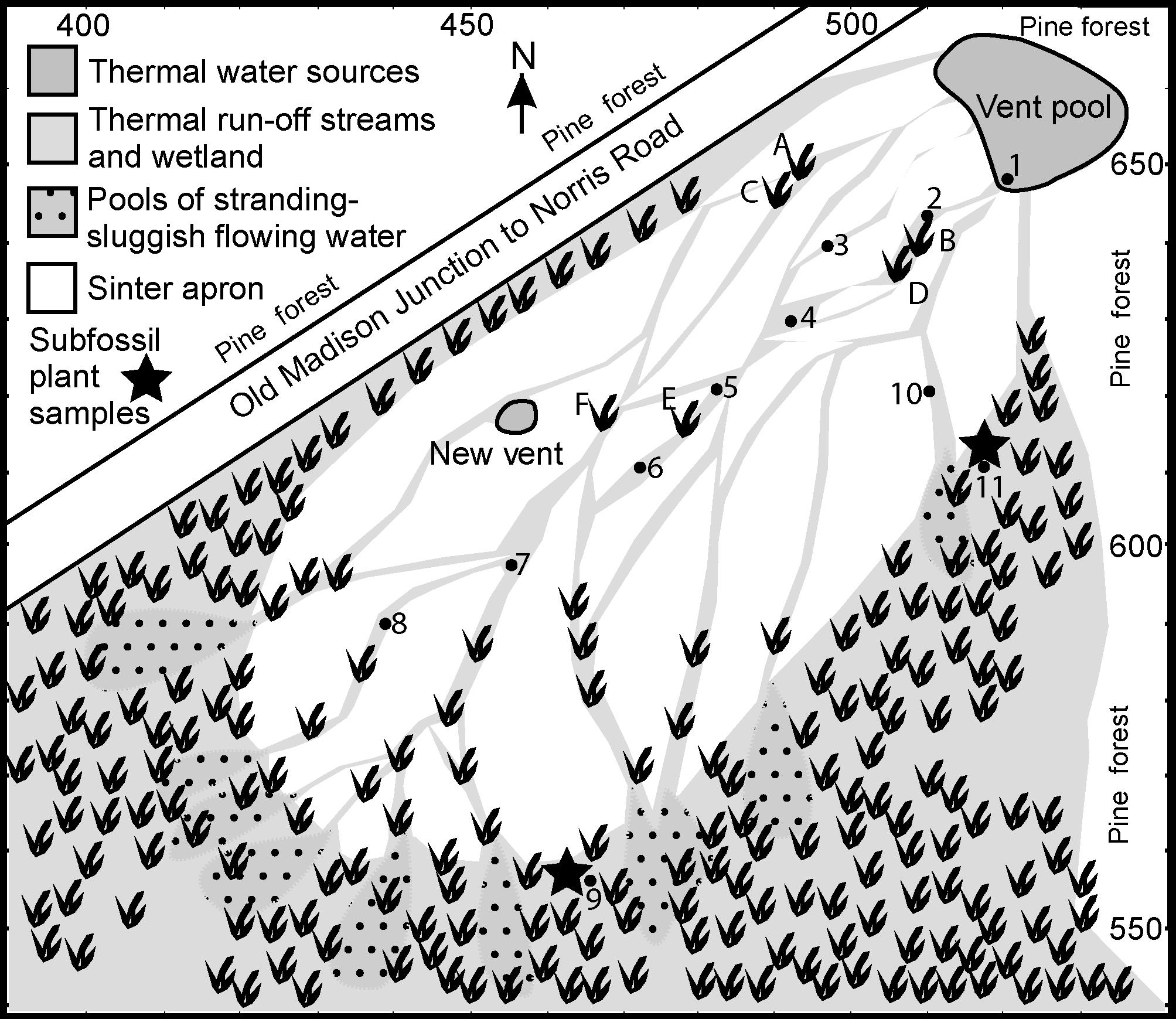 Silicification of higher plants in geothermally influenced