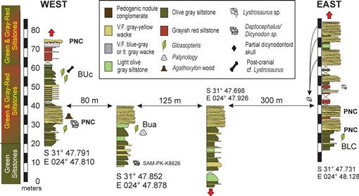 PALEONTOLOGY OF THE BLAAUWATER 67 AND 65 FARMS SOUTH AFRICA