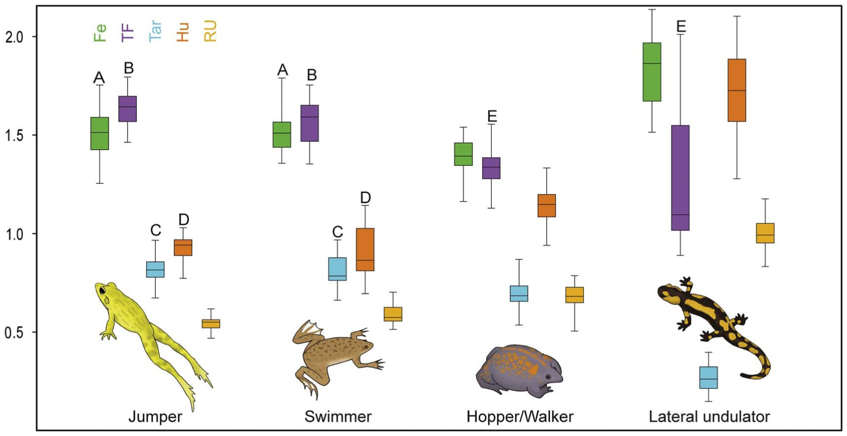 Walk before you jump: new insights on early frog locomotion from the