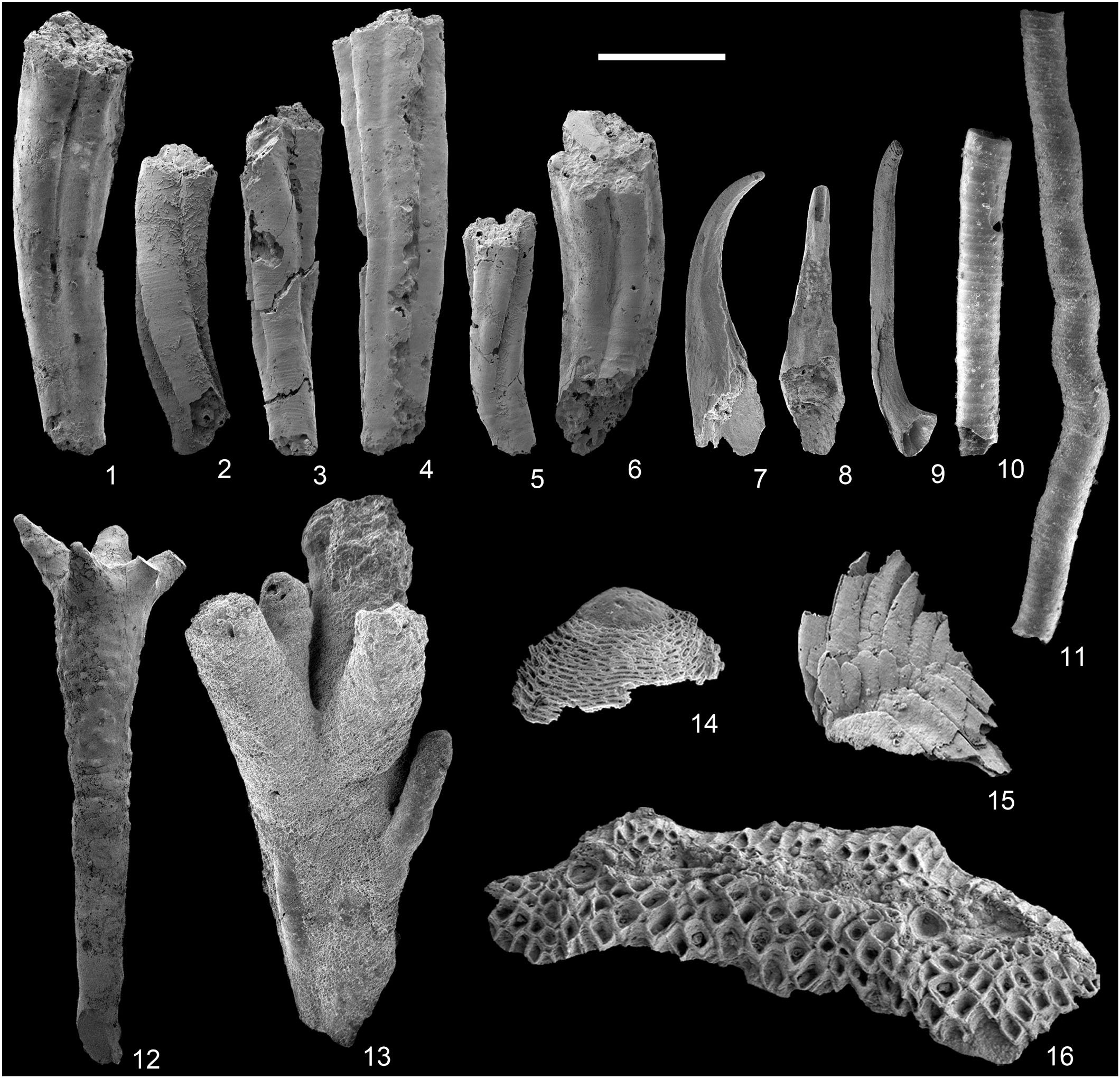 Diversity Of Cnidarians And Cycloneuralians In The Fortunian Early