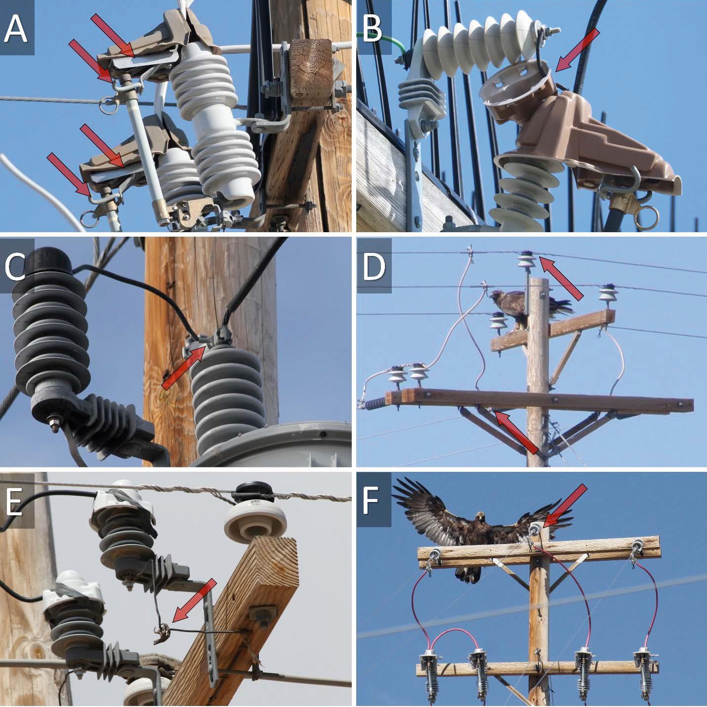 Avian Electrocutions on Incorrectly Retrofitted Power Poles