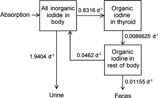 A Physiological Systems Model for Iodine for Use in