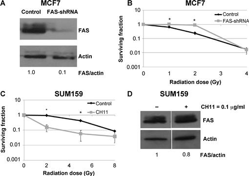 FAS Death Receptor: A Breast Cancer Subtype-Specific Radiation