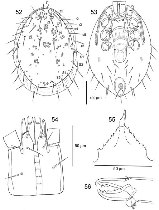 Systematics And Biology Of The Mite Genus Ljunghia Oudemans In
