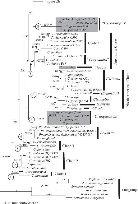 Biogeographic Patterns of Diversification and the Origins of C4 in
