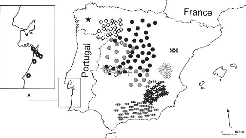 Morphological Variation Within And Between Taxa Of The Santolina
