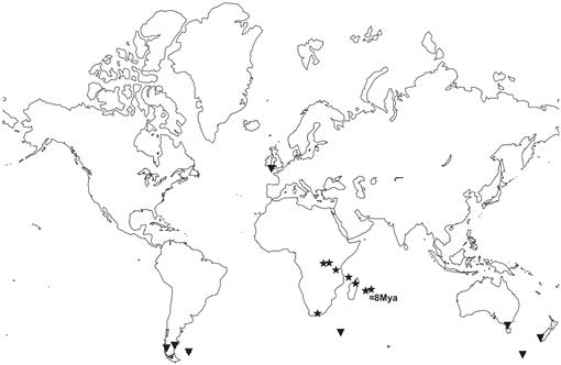 Phylogeographic Patterns in Two Southern Hemisphere Species