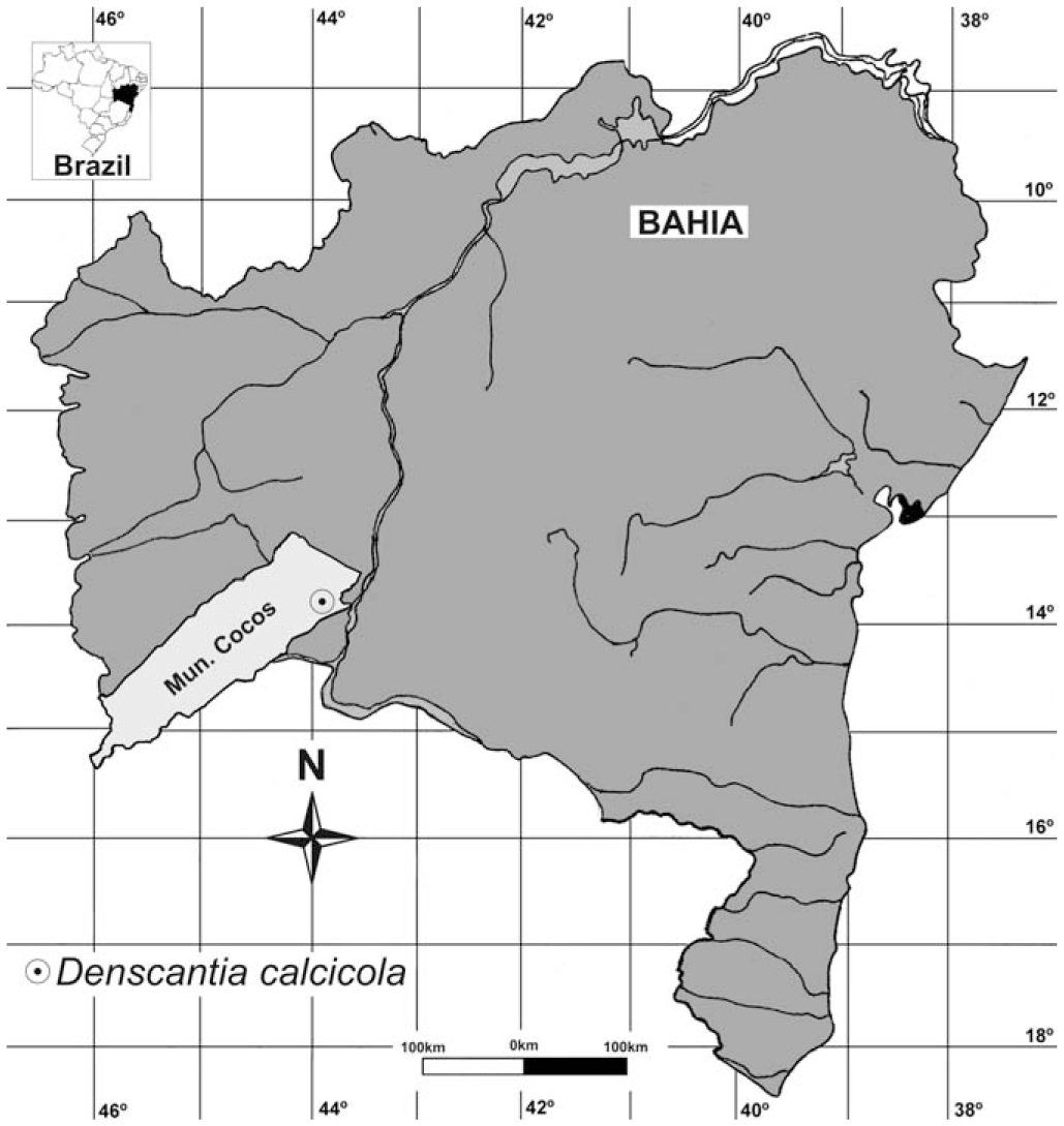 Denscantia calcicola (Rubiaceae), a New Species from