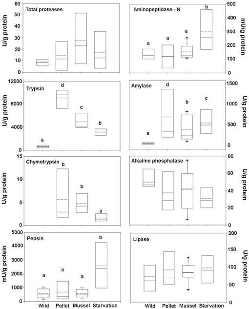 Effects of Different Diets on the Digestive Physiology of