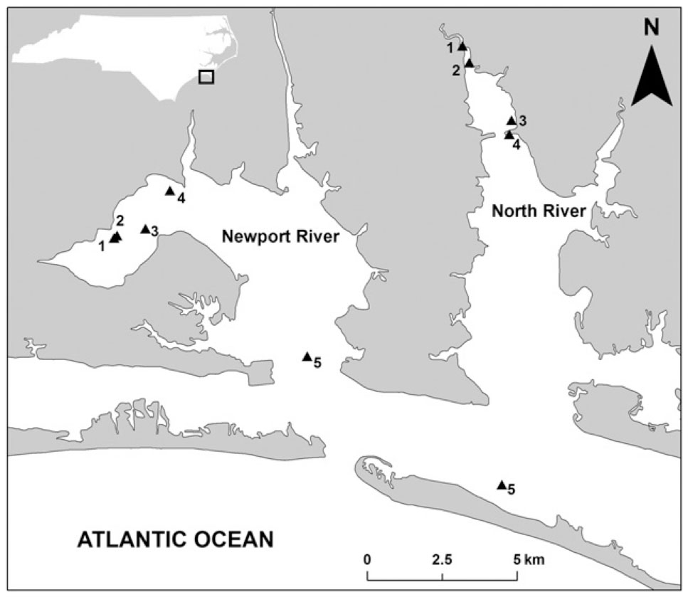 Effects of Substrate Type on Demographic Rates of Eastern Oyster ...