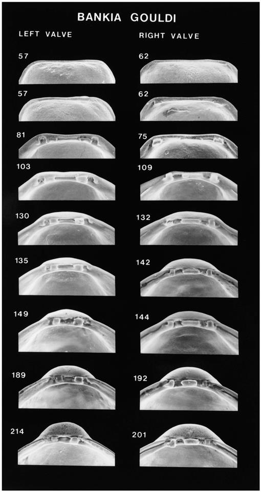 Scanning Electron Microscopic Aids for Identification of Larval and
