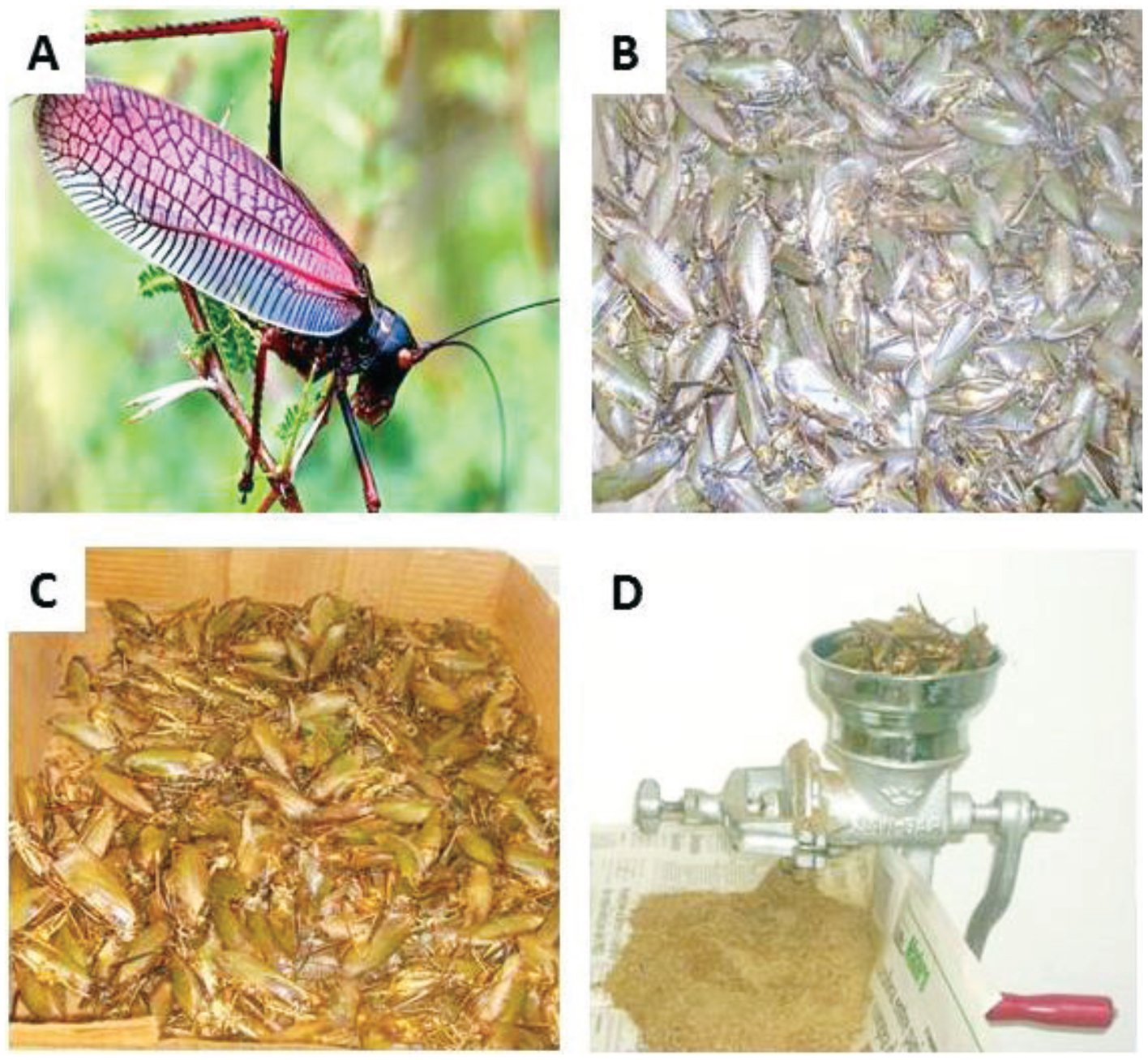 Evaluation of Biochemical Components from Pterophylla