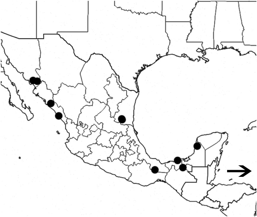 A Gaxonomic Review Of The Genus Pseudozonitis Dillon Coleoptera