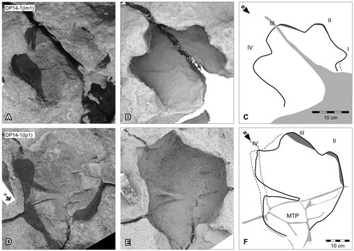 The Dinosaurian Ichnofauna of the Lower Cretaceous (Valanginian