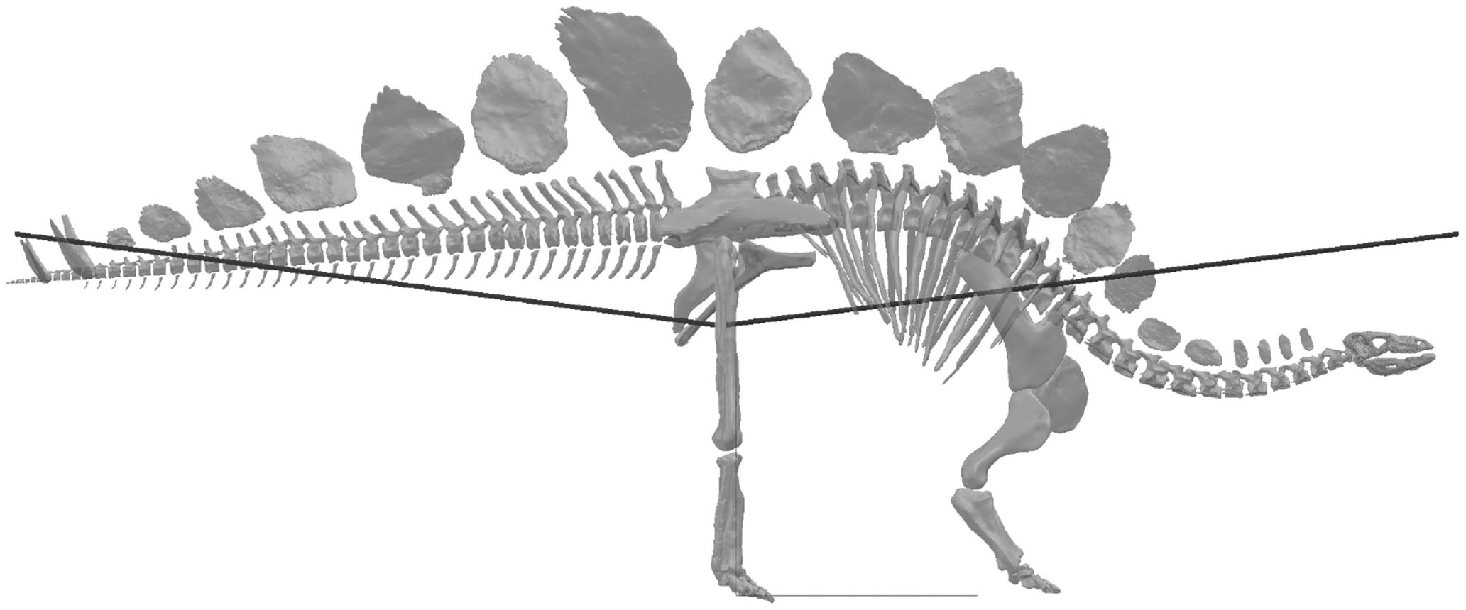Muscle Moment Arm Analyses Applied to Vertebrate