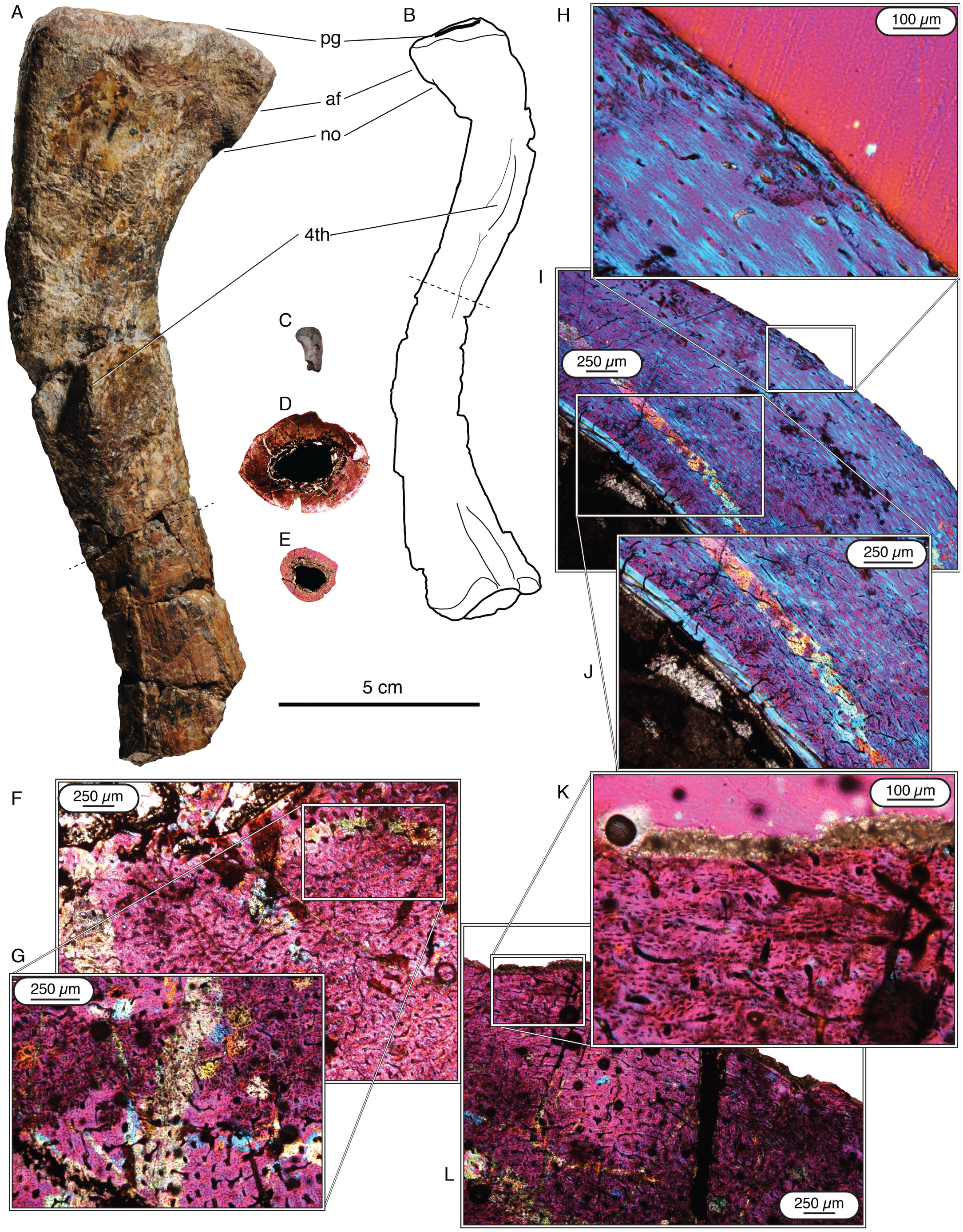 1a7a4fc66fd4 Updated Geology and Vertebrate Paleontology of the Triassic Ntawere ...