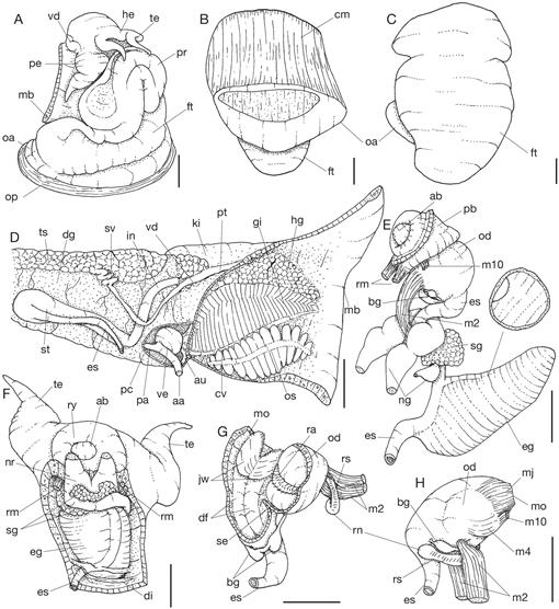 Taxonomic study on the molluscs collected during the Marion